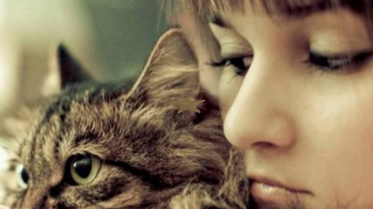 Флёр группа теплые коты