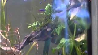 Аквариумное разведение рыбок
