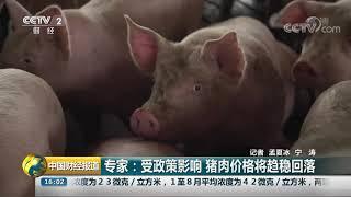 [中国财经报道]专家:受政策影响 猪肉价格将趋稳回落| CCTV财经