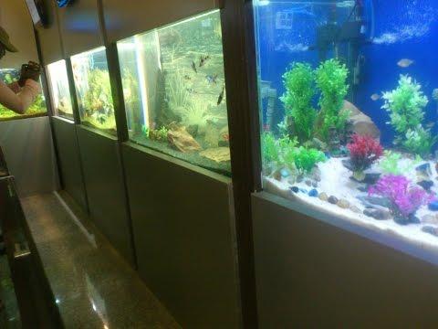 Taraporewala Miniature Aquarium - Marine Lines Mumbai
