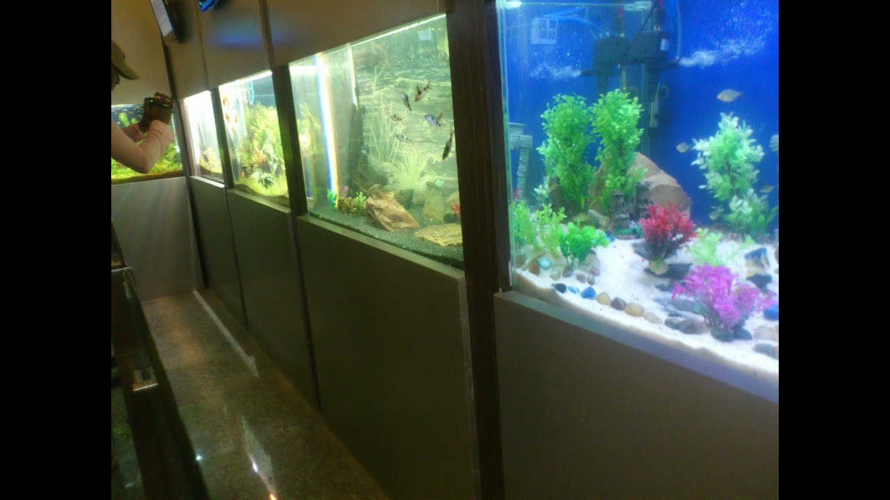 Taraporewala Miniature Aquarium Marine Lines Mumbai Youtube
