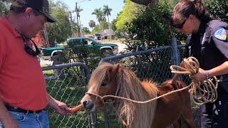 Escaped Pony Gets Personal Police Escort Back Home