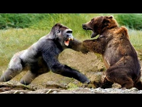 Most Aggressive Animals In The World