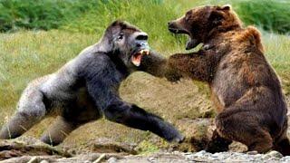 Most Aggressive Animals in the World