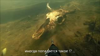 Подводная охота для начинающих (малые реки Смоленщины)