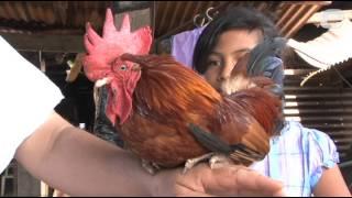 Un gallo bendito en Nahuizalco