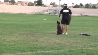 Police Dog Training - Get Him To Stop On A Dime.