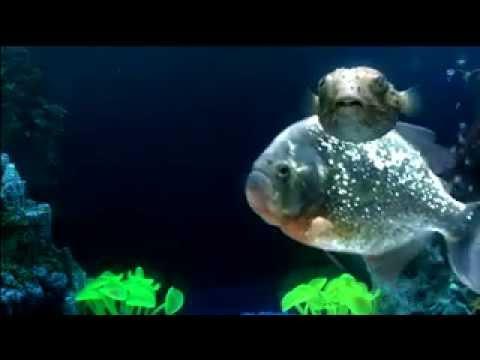 Amazing Singing Fish Favorite Hot Rapper