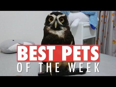 Best Pets of the Week | August 2018 Week 4