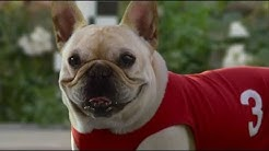 10 Funny Dog Commercials