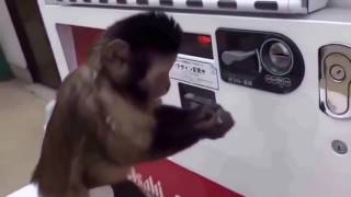 Покупка обезьянки