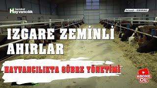 Hayvancılık Rehberi - Izgara Zeminli Ahırlar