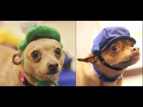 Adorable bonded pups looking for forever home together | The Dodo Project Home Live