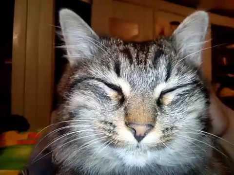 Кот свистит