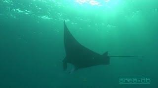 Science O.C.N. -  Deep Water Ocean Lounge - Stillstand