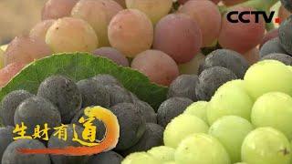 《生财有道》 20201225 咱们家乡有特产——河南陕州:高粱红 瓜果香 特产生财富一方| CCTV财经 - YouTube