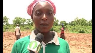 Maize Farmers learn from Demonstration field under INTERPIMP 15
