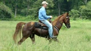 Direct son of Jazz Man -- bright sorrel Tennessee Walking Horse gelding for sale