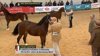 Prif Bencampwriaeth y Ceffylau - Horse Section Supreme Champion