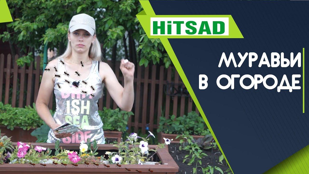 Как НАВСЕГДА избавиться от муравьёв на огороде ✔️ ЗА и ПРОТИВ Муравьёв!