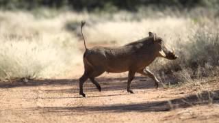 Dzika Afryka Namibia 2014 ZDJĘCIA