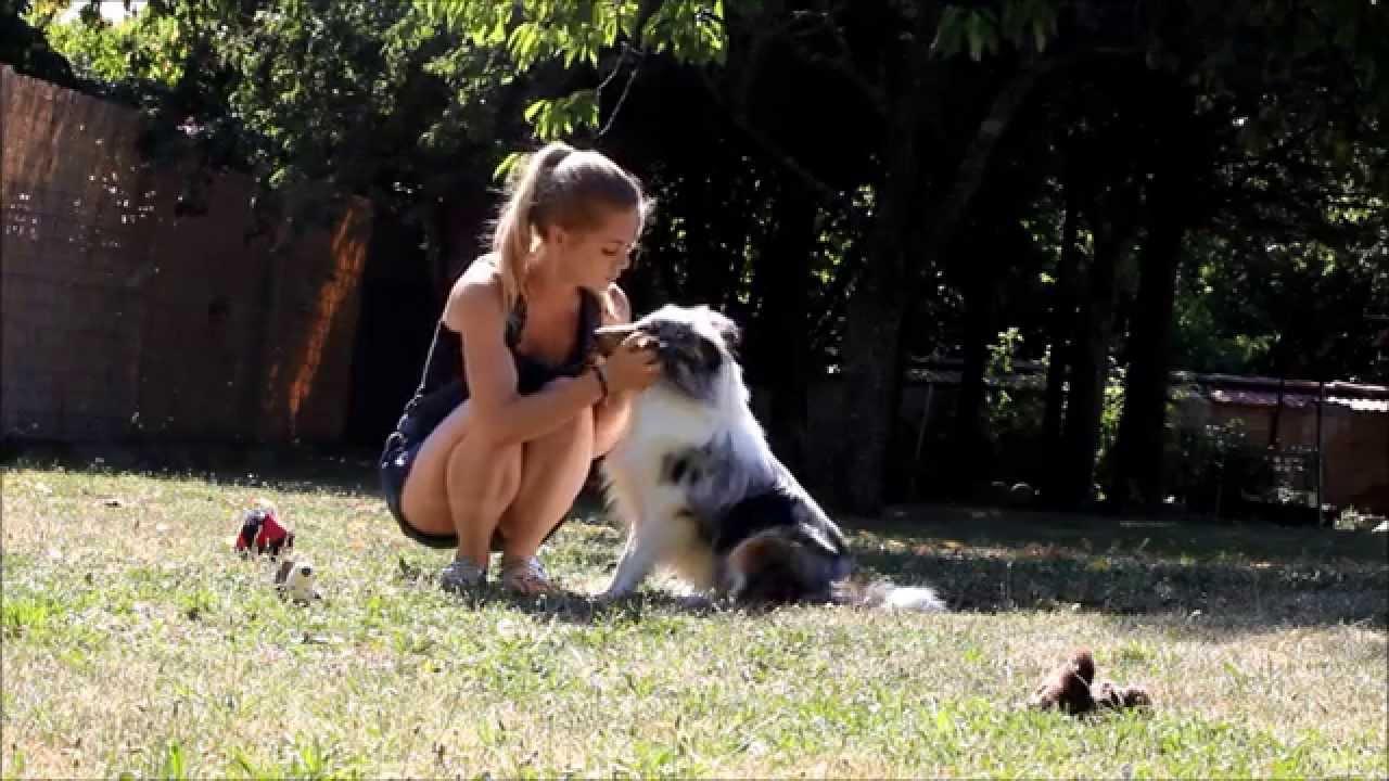 Mon Berger des shetland 7 mois - YouTube