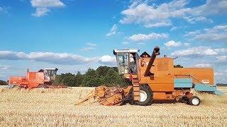 Żniwa 2019 - pszenica Ryk silników Bizon Z056