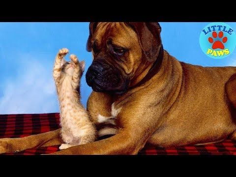 Try Not To Laugh Challenge – Funny Cat & Dog compilation NEW #2