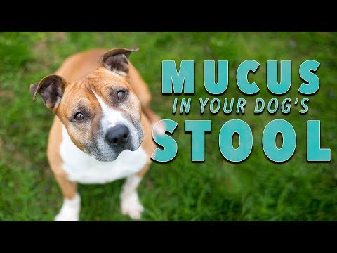 Mucus In Dog Poop — What Does It Mean?