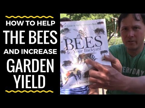 How You Can Help Native Bees & Increase Garden Yield at the Same Time