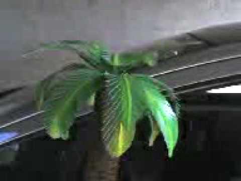 Palmera youtube - Como hacer una palmera artificial ...