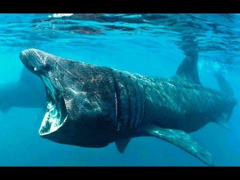 Самые Опасные Морские Животные | Документальный Фильм - Видео онлайн