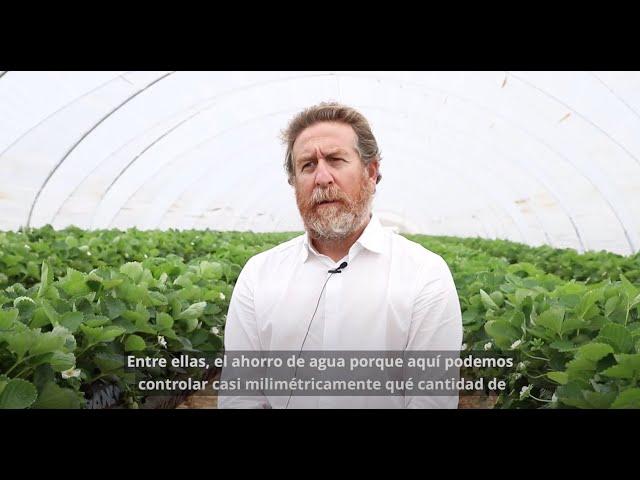 ¿Cómo cuidamos el riego en los cultivos hidropónicos de frutos rojos?