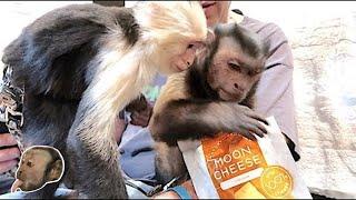 Monkey Full Moon MoonCheese Party!
