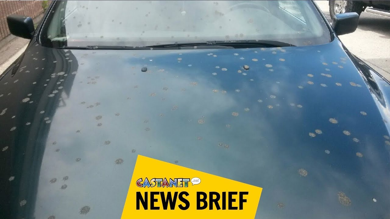 Liquid Poo Rains On Woman And Son Sitting In Car | HuffPost