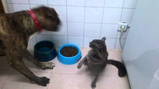 Dog and cat - fight for food