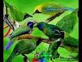 Tutorial Menjadikan Bakalan Pemikat Murai Daun Polos Mini Menjadi Super Gacor  Mp3 - Mp4 Download