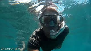 Maui Snorkeling 2017