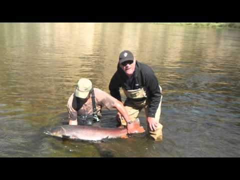 "Fly fishing for 50"" Taimen in Mongolia"
