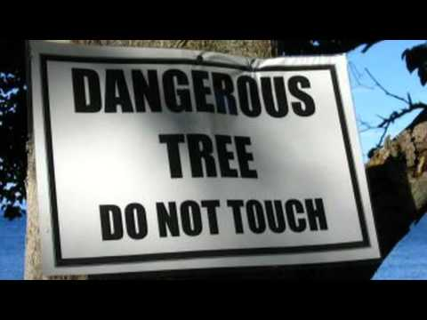 World's Most Dangerous Tree - The Manchineel