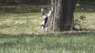Jackie Cabo Pups 3 Mos 1 Week