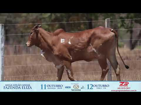 LOTE 172