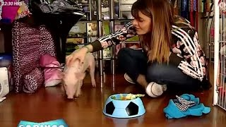 Mariana Marino aceptó el desafío y adoptó como mascota a un cerdito (1/2) thumbnail