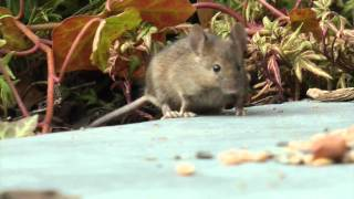 Small mouse and bird in our garden-with a lil help from my friends
