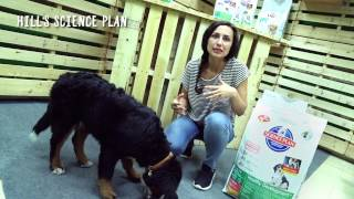 Hill's Science Plan para cachorros - Tiendanimal