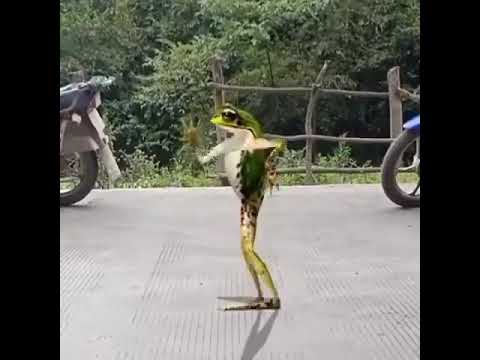 Memes Para Qualquer Momento Na Internet Memes Kermit O Sapo