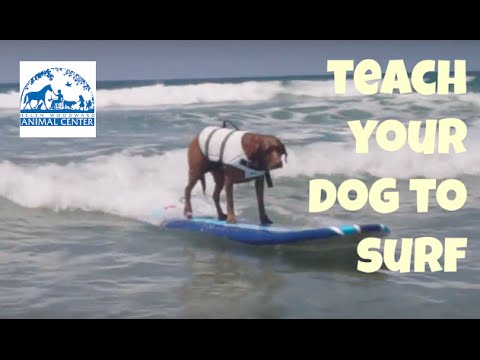 Surf Dog Lessons - Dog Surfing on August 10