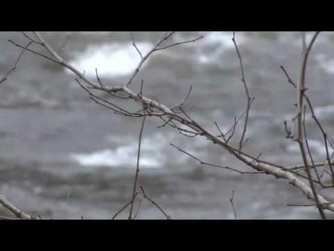 River Stock Footage - Wissahickon Creek - Philadelphia, Pennsylvania - Free Nature Shots