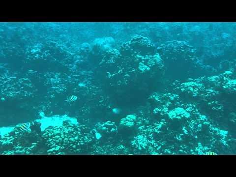 Cayman UW