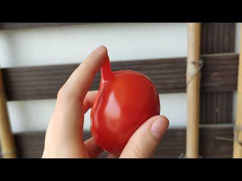 Quả Cà Chua Kì Dị/This Weird Ass Tomato